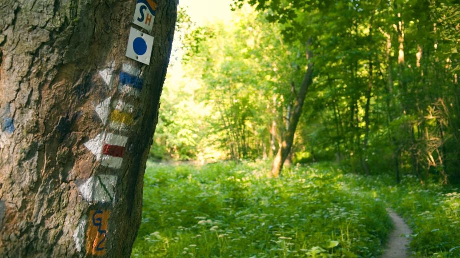 Wanderweg in Jena mit Streckenmarkierungen © JenaKultur, Foto: Frits Meyst